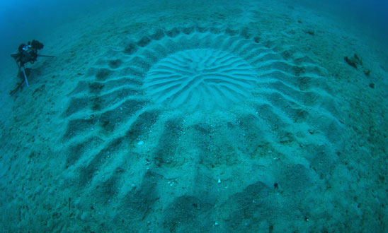 underwater-mystery-circle-8