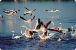 flamingos_1.jpg